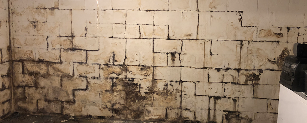 Moldy Wall | Area Waterproofing & Concrete | Wisconsin
