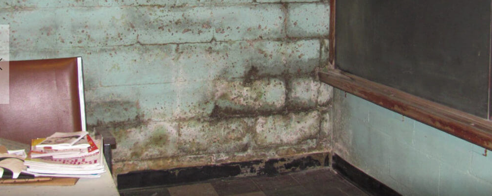 top-page-basement-crawl-space-mold-1024x400